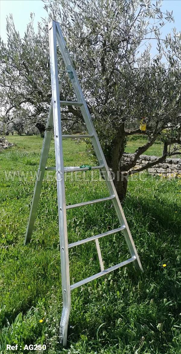echelle pour ceuillir les olives ag250