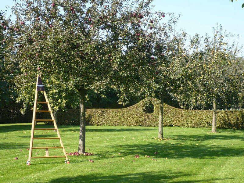 Ernte Obstbaumleiter