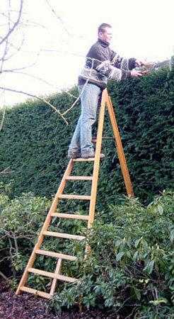 Heckenschneiden Obstbaumleiter