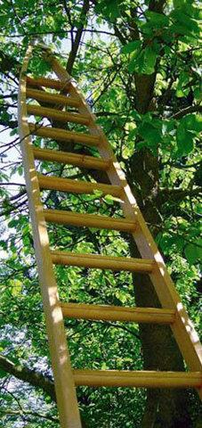 scala agricola albero